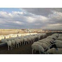 2%肉羊全价颗粒饲料核心料 全程提供配方支持 羊全价颗粒饲料配方