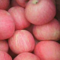 山东红富士苹果价格 膜袋红富士苹果批发