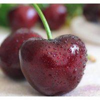 山东烟台大樱桃自家种植大面积原产地发货寻求国内微商电商代理合作一件代发美早红灯品种