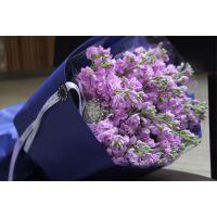 武汉鲜花同城送货紫罗兰鲜花,可定制,有各类型的鲜花,当天可到