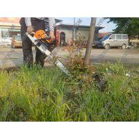 苗木搬家挖树机 浩发移植挖树机型号