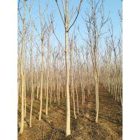 臭椿树属落叶乔木,树皮灰色或灰黑色,又名春树,可作园林风景树和行道树,