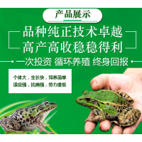 江苏全饲料喂养人工青蛙,人工培育养殖优质青蛙