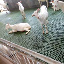 塑料羊地板 全舍饲高床塑料漏粪地板 羊场用网床