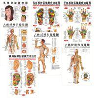 人体经络穴位按摩图足部手部耳部反射区健康挂图头部保健挂图