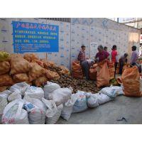 红花油茶种植基地图片 大果红花油茶嫁接苗价格可实地购买或快递
