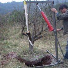 轻便小型挖树机 链式带土球起树机 湖南刨树机