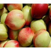 出售1年2年3年4年5年6年7年生桃树 出售1-7公分桃树 出售防冻毛桃树