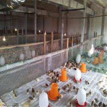 绿化塑料平网 雏鸡养殖网 养鸭平网
