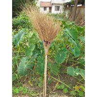 竹扫帚,金竹金枝,做工精细,美观大器,轻巧赖用,快捷省力,新产品。