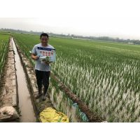 水稻全能型高产套餐芸多乐产品介绍