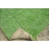 北京专业园林养护公司,草坪养护,绿篱养护,绿地养护