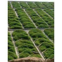 三明明溪宁化大田高速公路边坡草种供应商护坡固土草种灌木