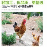 河南土鸡供应商