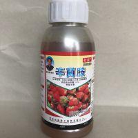 草莓灰霉病白粉病炭疽病有救了就用草莓锁菌净