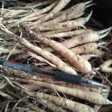 桔梗种子一亩地播种3公斤@@桔梗亩产效益8000元左右