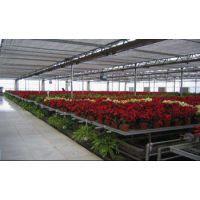 冬暖式大棚热镀锌花卉大棚种植