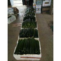 大棚黄瓜拉长拉直专用叶面肥 无激素光碳肥黄瓜专用