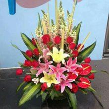 植物路花店植物路订花束15296564995唐城路花店送开张花篮唐城路节日玫瑰鲜花