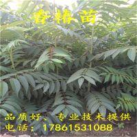 http://himg.china.cn/1/4_397_236160_800_800.jpg
