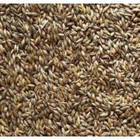 质量优的大麦芽小麦芽 啤酒麦芽山东供应商 啤酒原料山东 永顺泰辛巴赫品牌