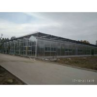 海南纹络尖拱型玻璃温室暖房20000平米工程承建厂家