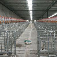 预算设计安装自动养猪料线 定时定量上料设备 工艺精密 环保材质