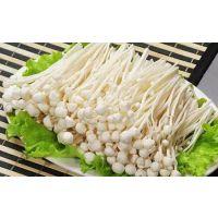 食用菌蘑菇水浴式清洗机金针菇漂烫机流水线