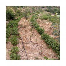 湖北湖南山区果园滴灌设备一亩多少钱