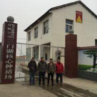 安徽宿州客户齐聚武汉鄂美核心种猪场