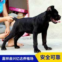 嘉祥县兴亿达幼年卡斯罗犬幼犬养殖场供应