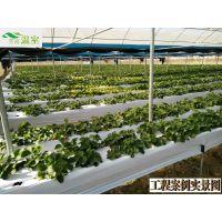 草莓星球,最土豪的观光采摘园,文洛型玻璃温室,草莓设施