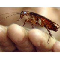 南昌杀虫公司可以灭蟑螂吗,酒店灭蟑螂哪家好