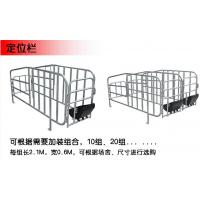 腾诚畜牧设备制作母猪定位栏尺寸 定位栏厂家批发 定位栏