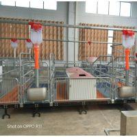 德州贺富供应优质母猪产床欧式母猪分娩床