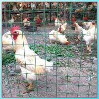 荷兰网圈地网浸塑网养鸡网绿色围网厂家