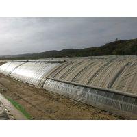供应北京中荷润农薄膜与阳光板日光温室造价与施工