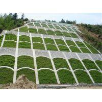 广西省承包高速公路边坡复绿植草方案