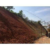广西省边坡绿化施工常用固土绿化草籽批发