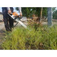 小型链锯式挖树机 润众 树苗移植挖树机