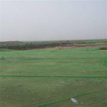 防尘绿网 遮阳网 3针盖土网