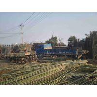 菜架杆 2-3m 树支撑,大竹竿6-10m