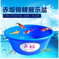 锦鲤塑胶圆盆批发 折叠池 暂养锦鲤鱼盆 赤坂就是这么简单