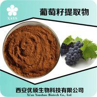 厂家供应 葡萄籽提取物 原花青素 95% 花青素  西安优硕 现货包邮