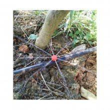 四川山上果树滴灌安装技术视频