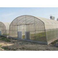温室工程承建,温室工程,青州瑞青(在线咨询)