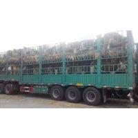 如何降低新购牛羊的发病率