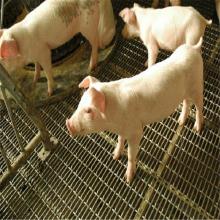 养殖铁丝网 钢丝过滤网 漏粪网