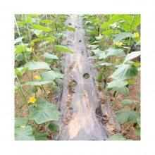 辣椒贴片式膜下滴灌带一米多少钱