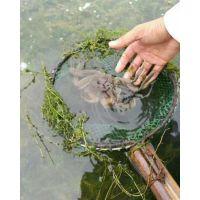 2.5两母鲜活大闸蟹 安徽无为螃蟹 食用螃蟹 全国配送 冬季正常供应